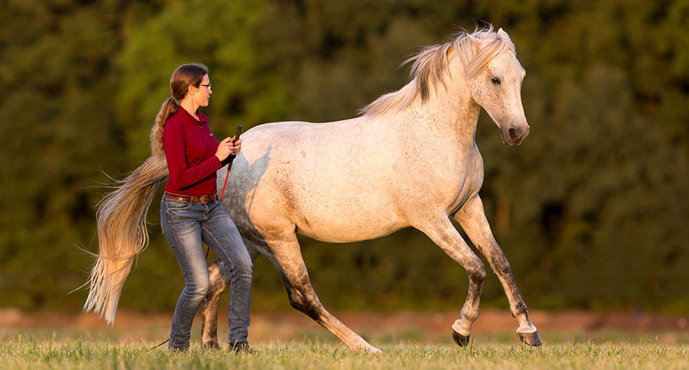 Gabi Neurohr with her Shagya Arabian mare Mayana at liberty