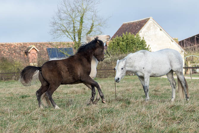 Gabi Neurohr Foal Handling - clear body language of the mare