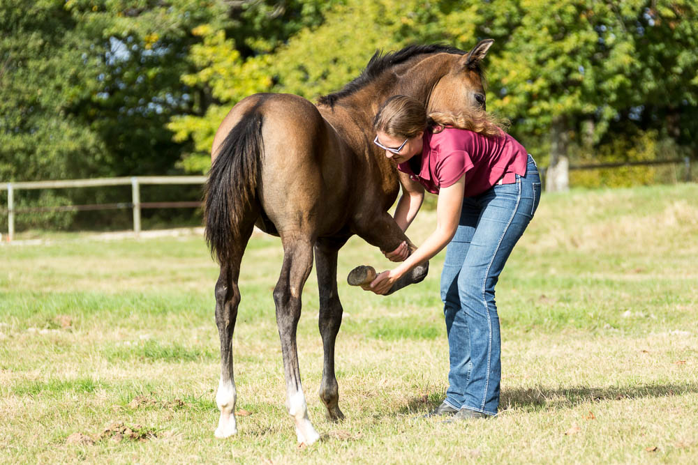 Gabi Neurohr Foal Education - giving a front hoof
