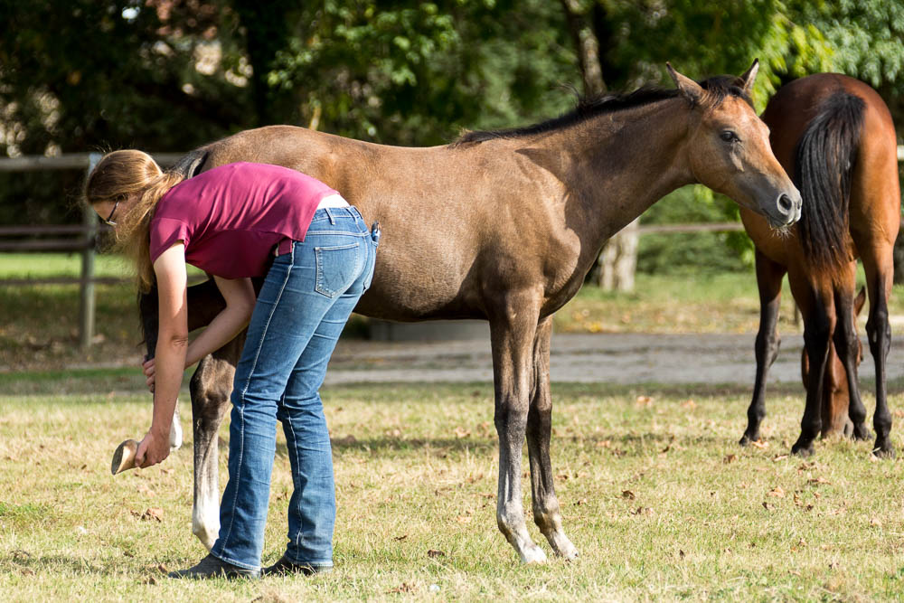 Gabi Neurohr Foal Education - giving a hind hoof