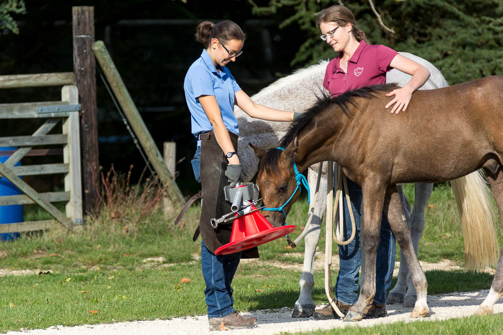 Gabi Neurohr Foal Education - foal meets the farrier for the firts time
