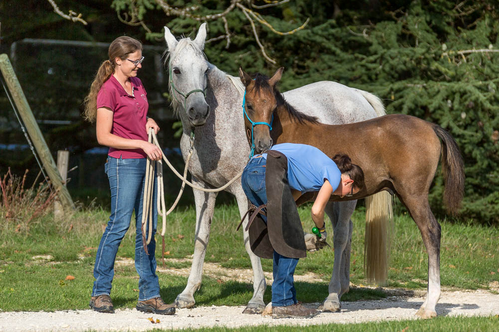 Gabi Neurohr Foal Education - foal is trimmed by the farrier
