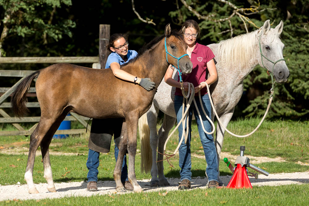 Gabi Neurohr Foal Education - farrier cuddles the foal after the trim