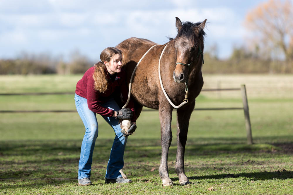 Gabi Neurohr Foal Education - cleaning out front hoof