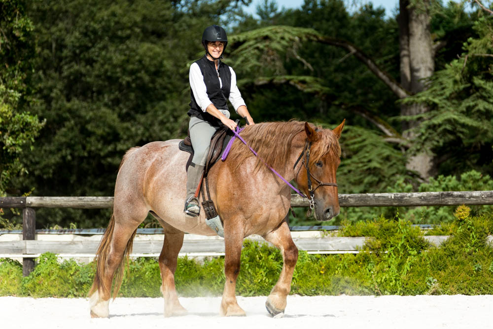Gabi Neurohr Colt Starting - Draft horse ridden in riding arena