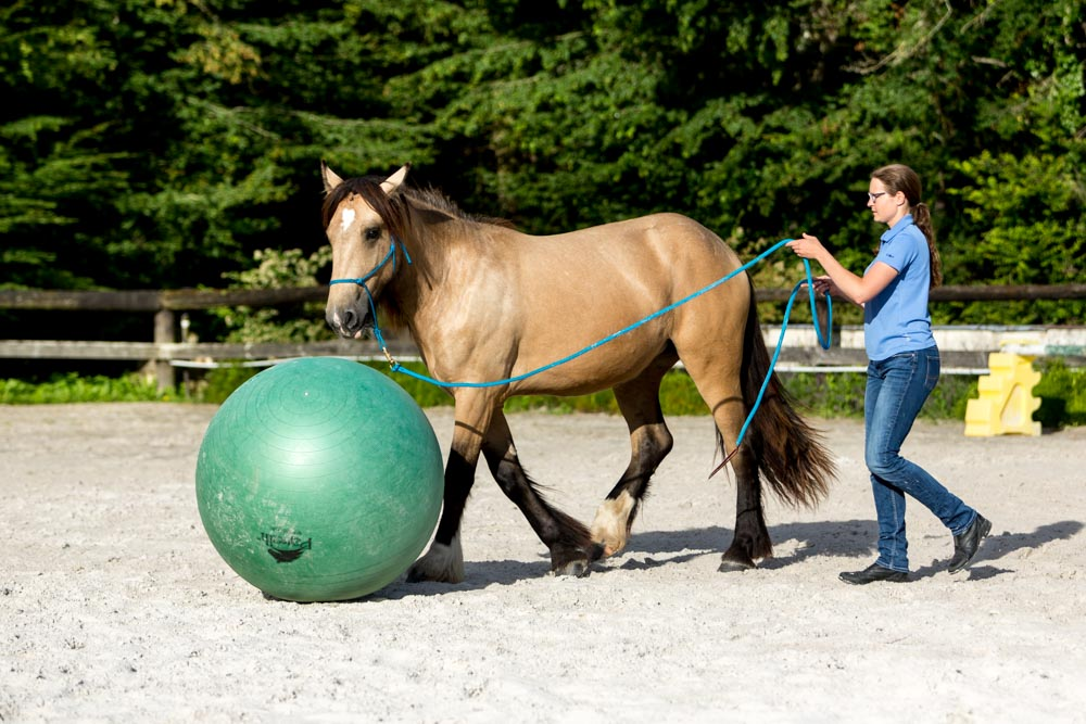 Gabi Neurohr Young Horse Training - Irish Cob mare plays the ball