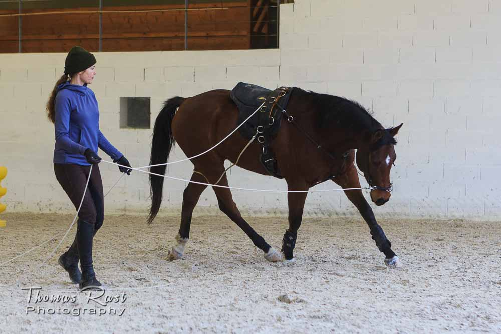Gabi Neurohr Horse Training - establishing Routine