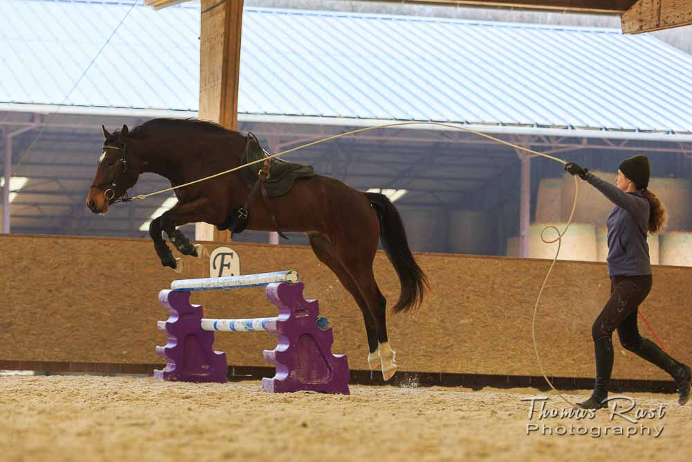 Gabi Neurohr Horse Training - Jumping Gymnastic