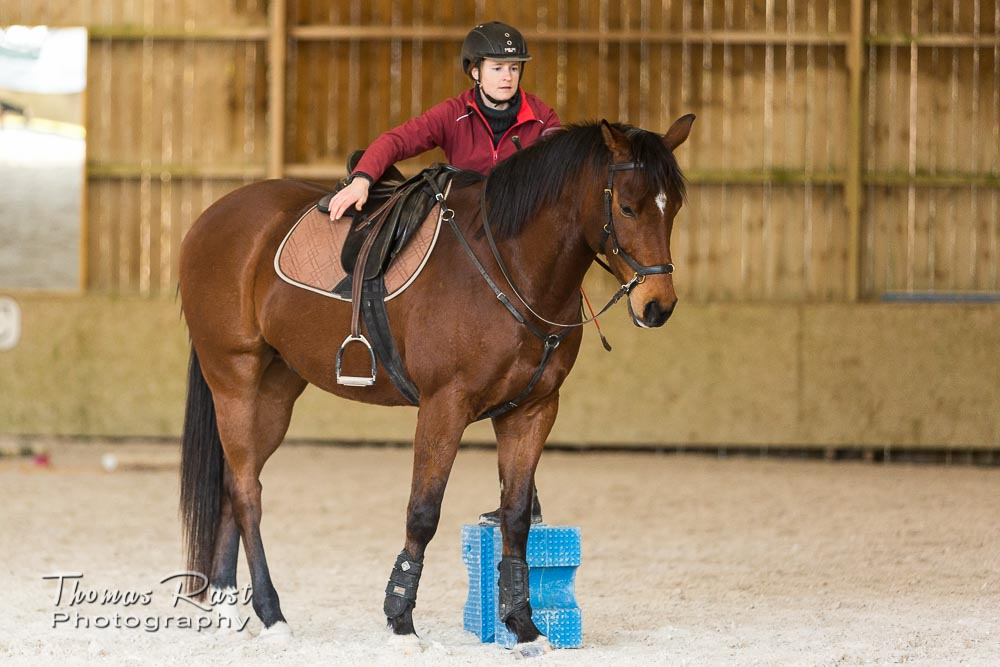 Gabi Neurohr Horse Training - Zayin is focused and calm