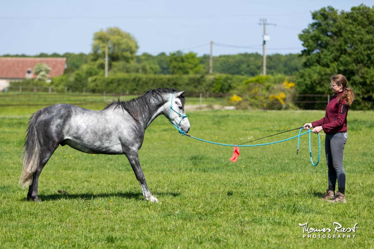 Gabi Neurohr Horse Training - Aslan from fear to trust