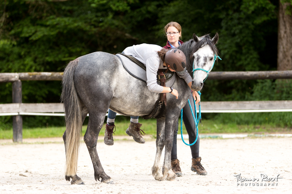 Gabi Neurohr Problem Horses - Aslan learns to accepts the rider
