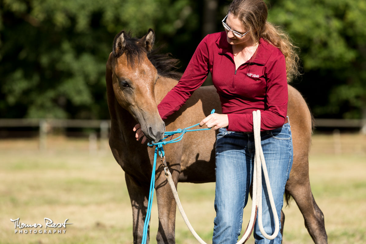 Gabi Neurohr Young Horse Training - foal Maserati is playing with the halter