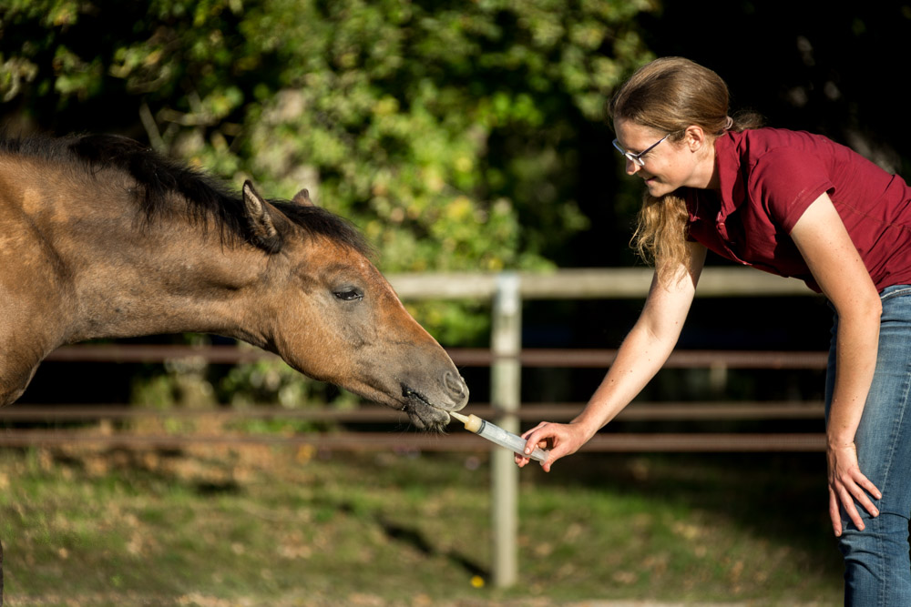 Gabi Neurohr Young Horse Training - deworming a foal