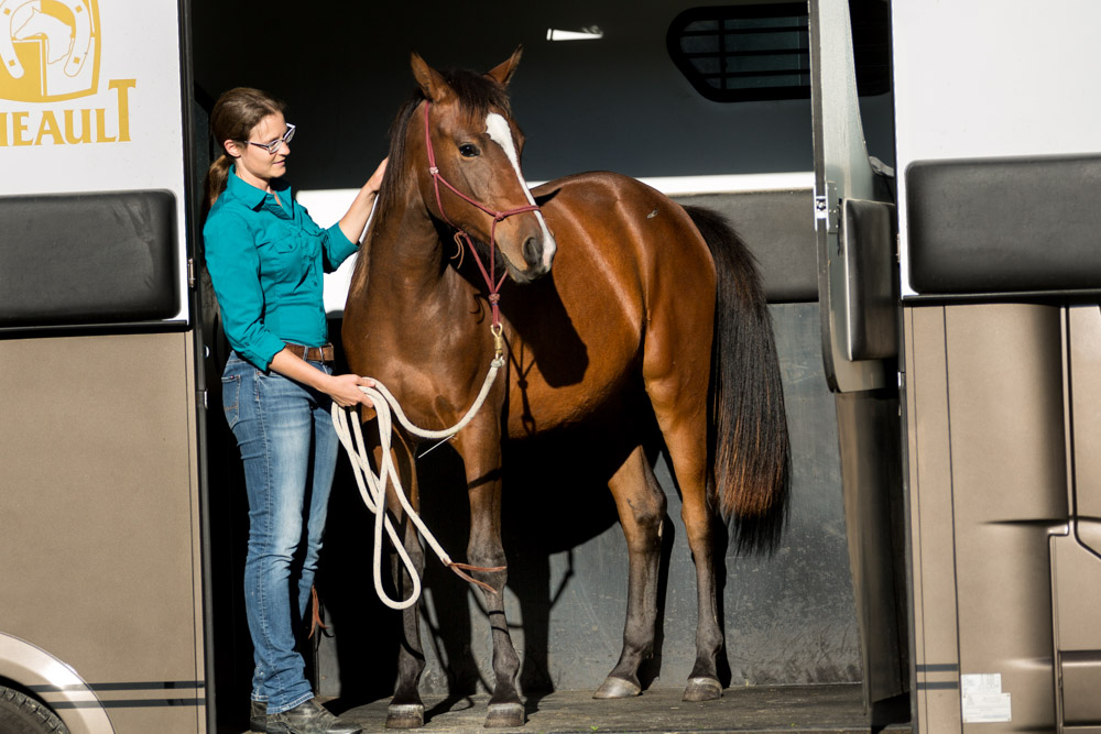 Gabi Neurohr Young Horse Education - Shagya filli Tara in the horse truck