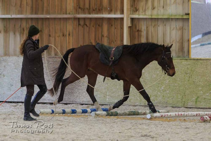 Gabi Neurohr-Horse Training-balance and coordination