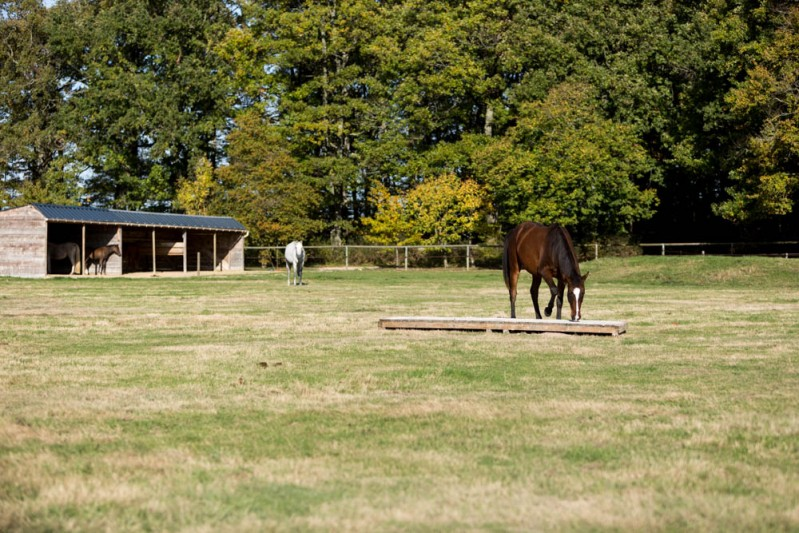 Gabi Neurohr Young Horse Education - a wooden bridge in the pasture
