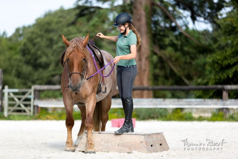 cheval de trait debourrage