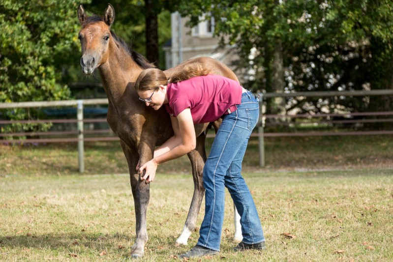 Gabi Neurohr Young Horse Education - Gabi is scratching her foal on the led