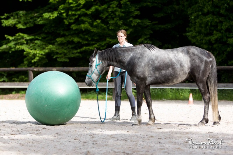 Gabi Neurohr difficult horse friendly game with the ball my horse is afraid of the ball
