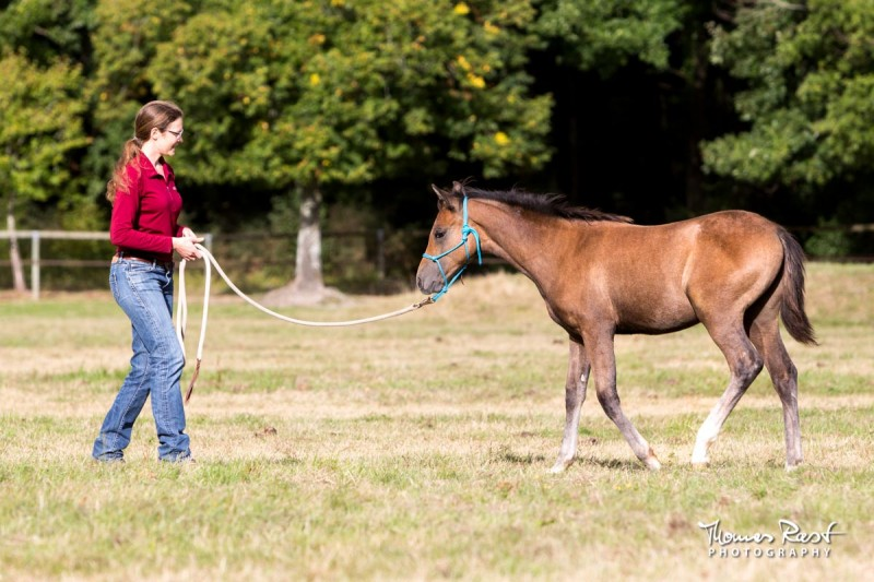 Gabi Neurohr young horse education - horse trainer is teaching a foal to follow the feel of the halter