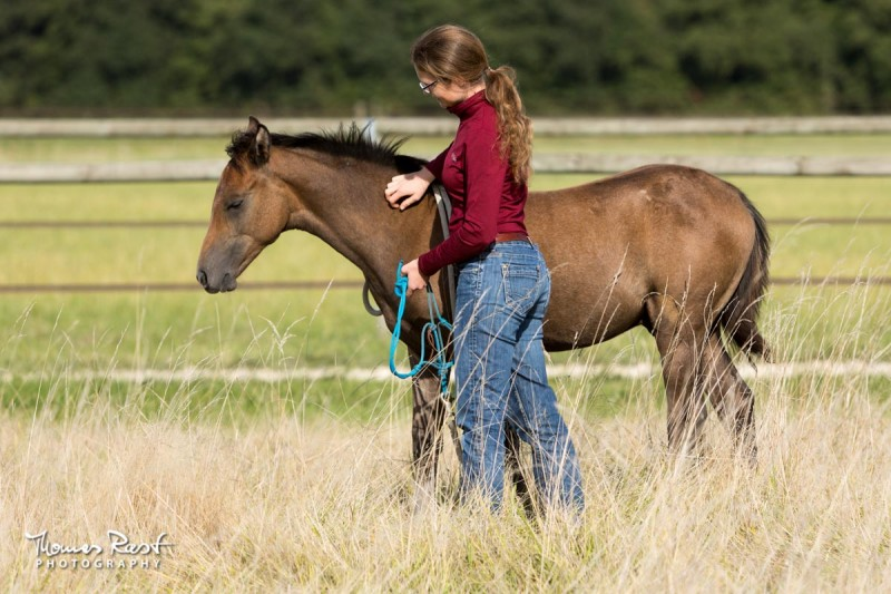 Gabi Neurohr young horse education - a young horse specialist is showing the halter to a foal