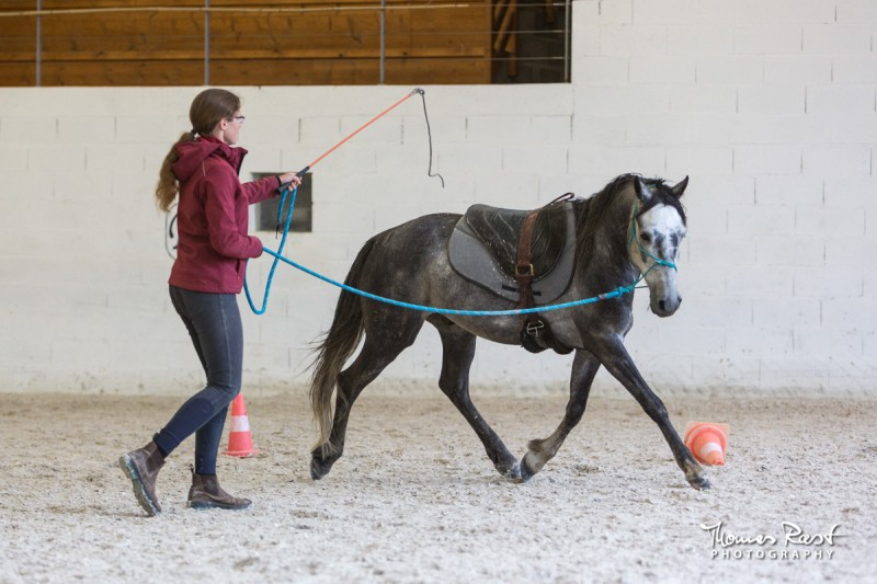 Gabi Neurohr difficult horse friendly game with saddle my horse is afraid of the noises of the saddle
