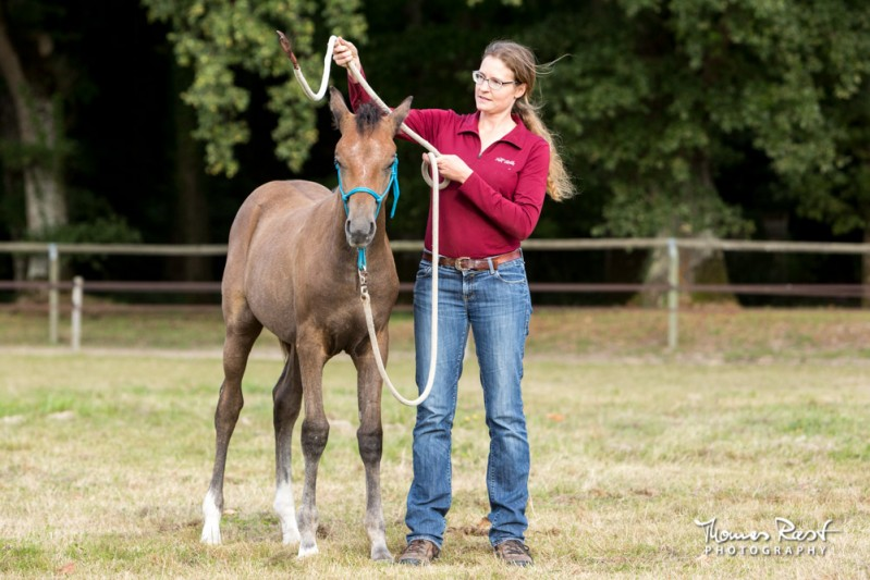 Gabi Neurohr young horse education - a horse specialist plays friendly game with a sceptical foal