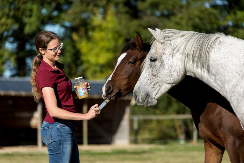 Gabi Neurorh young horse education - horse trainer is doing warm past simulations with applesauce